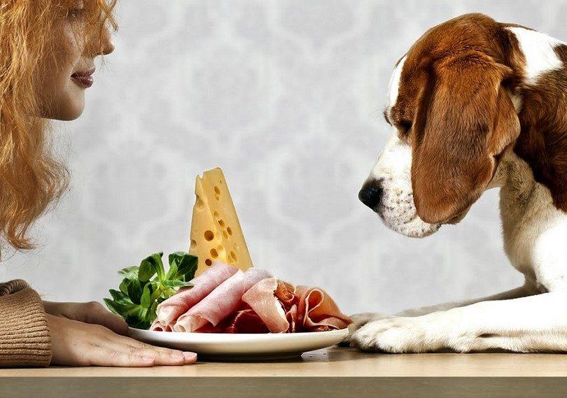 кучешка храна, здравословни проблеми, проблеми при кучетатата, готвар